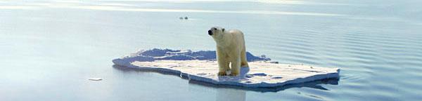 Climate Change Bear