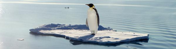 Climate Change Penguin