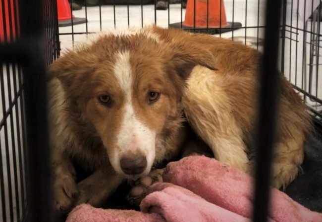 Border collie seized near Wolfville
